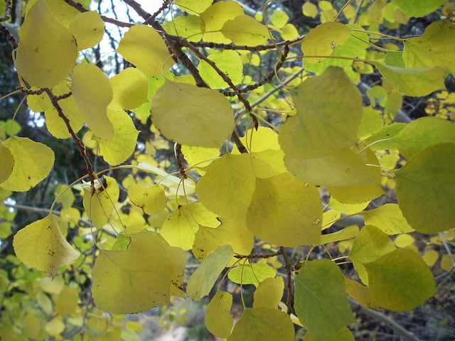 Fall in Colorado~enjoy